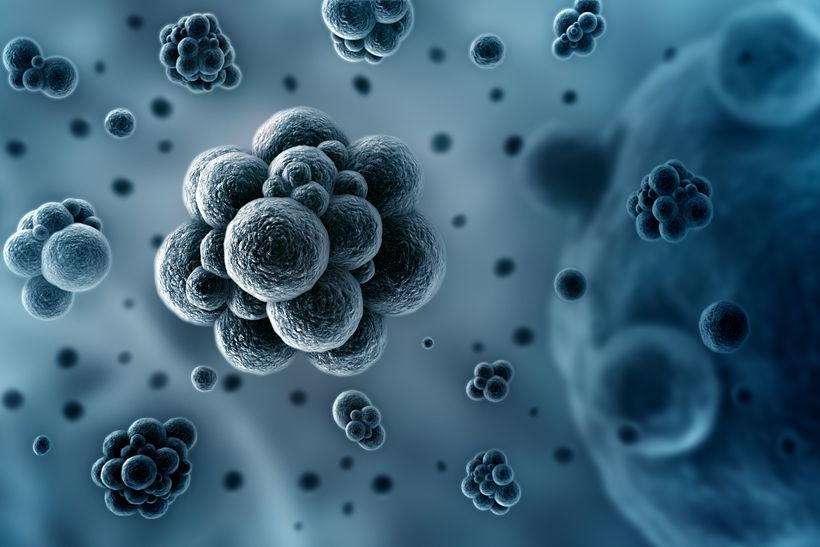 Sản phẩm có đặc tính sát khuẩn tốt - kích thích hệ miễn dịch 1