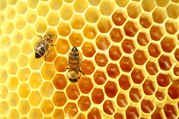 Keo ong thần dược trị ho viêm họng và nhiệt miệng