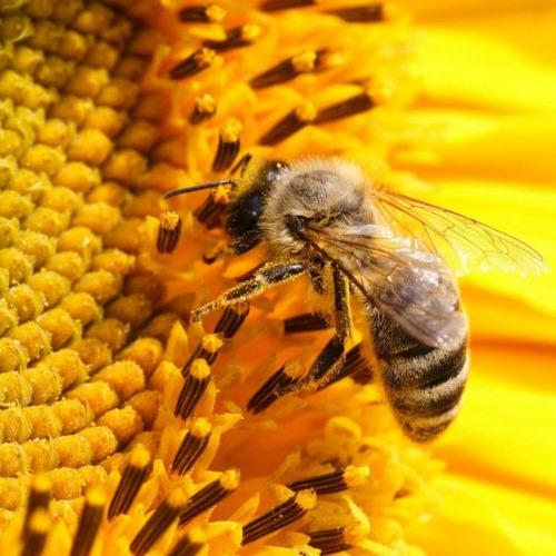 Tính kháng khuẩn của keo ong 1