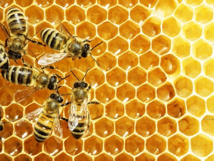 Nguồn gốc của keo ong 1